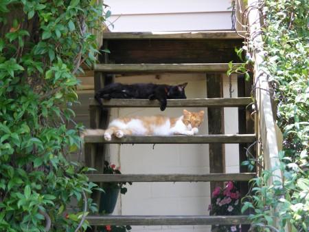 Tybee Island cats