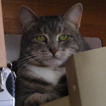 Jester on Trav's Monitor
